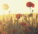 gestalt bellezza sublime campo fiori igat psicoterapia