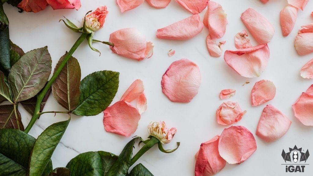 psicosomatica malattia psiche terapia paziente rosa appassita
