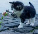 contatto igat scuola psicoterapia analisi gatto cat