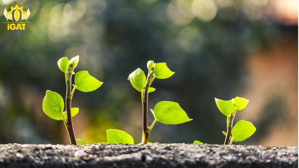 crescita processo bambino